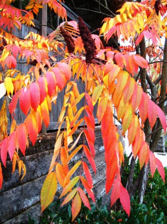 Fall color 10-22-09 002