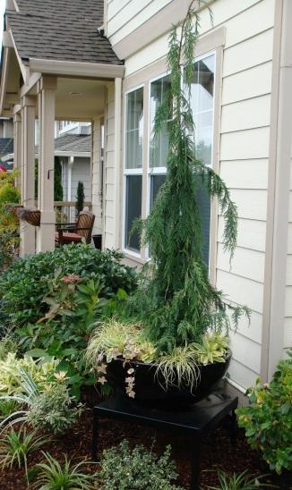Fall Garden Pics 10-28-09 007