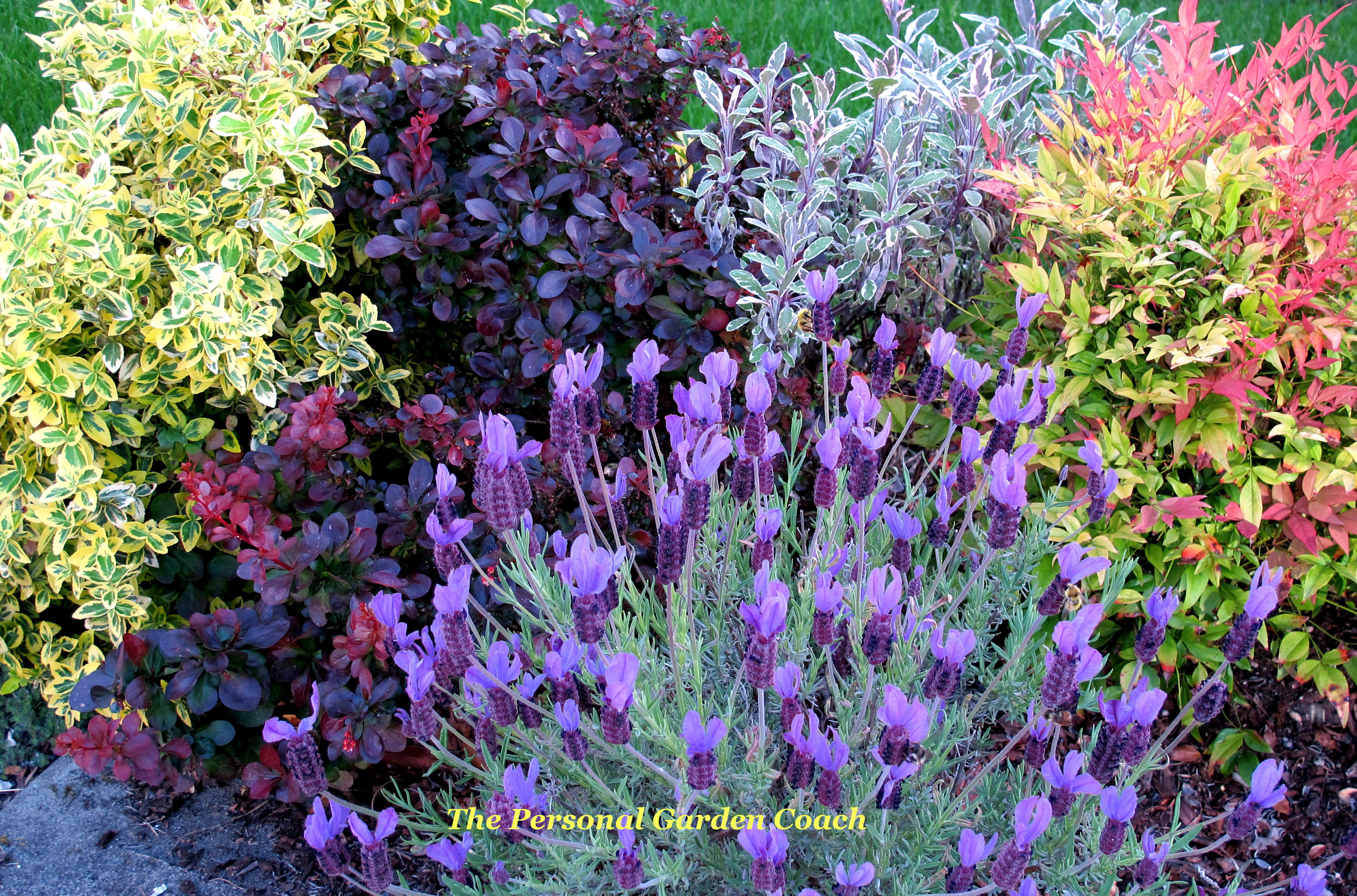 plants with u201cmultiple personality in order u201d the personal garden