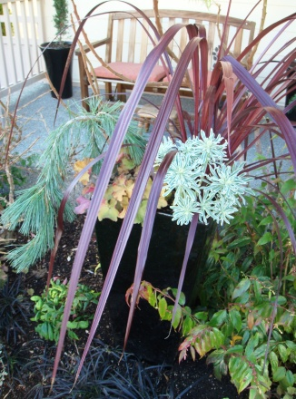 Winter Front Container Combo 11-12-09 010