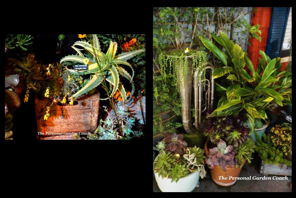 The San Francisco Flower And Garden Show Container Drama The Personal Garden Coach
