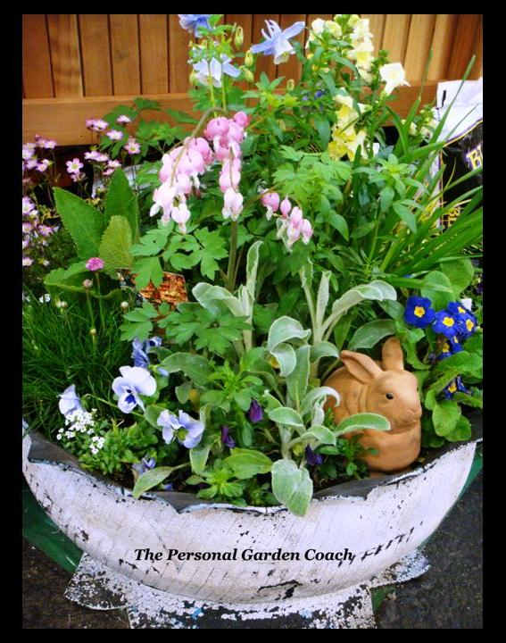 The san francisco flower and garden show container drama personal garden coach for San francisco flower and garden show