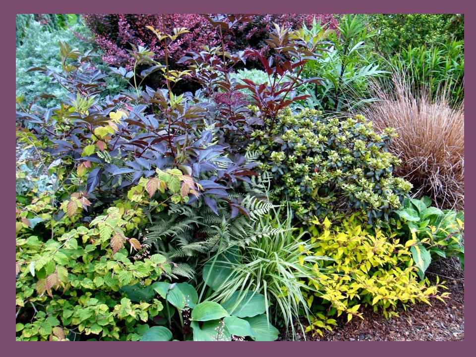 Cabernet and Chocolate Anyone? Sumptuous Bright Shade Border | THE ...