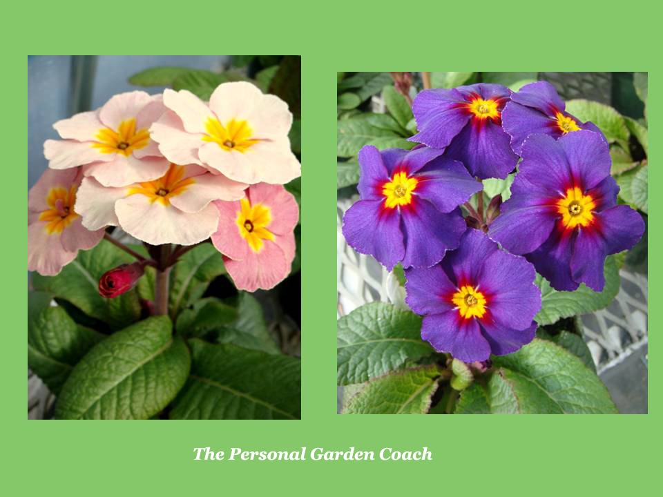 Early flowering perennial performers for impact personal garden coach - Flowers that bloom from spring to fall ...