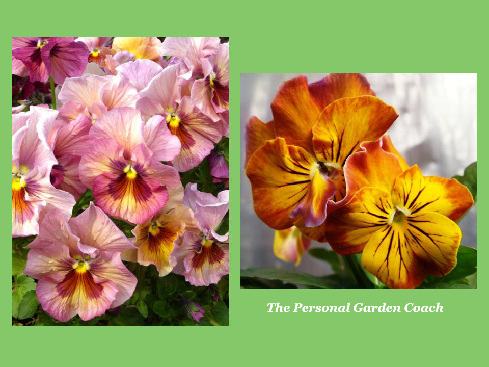 Early flowering perennial performers for impact the personal this overview of early blooming perennials mightylinksfo