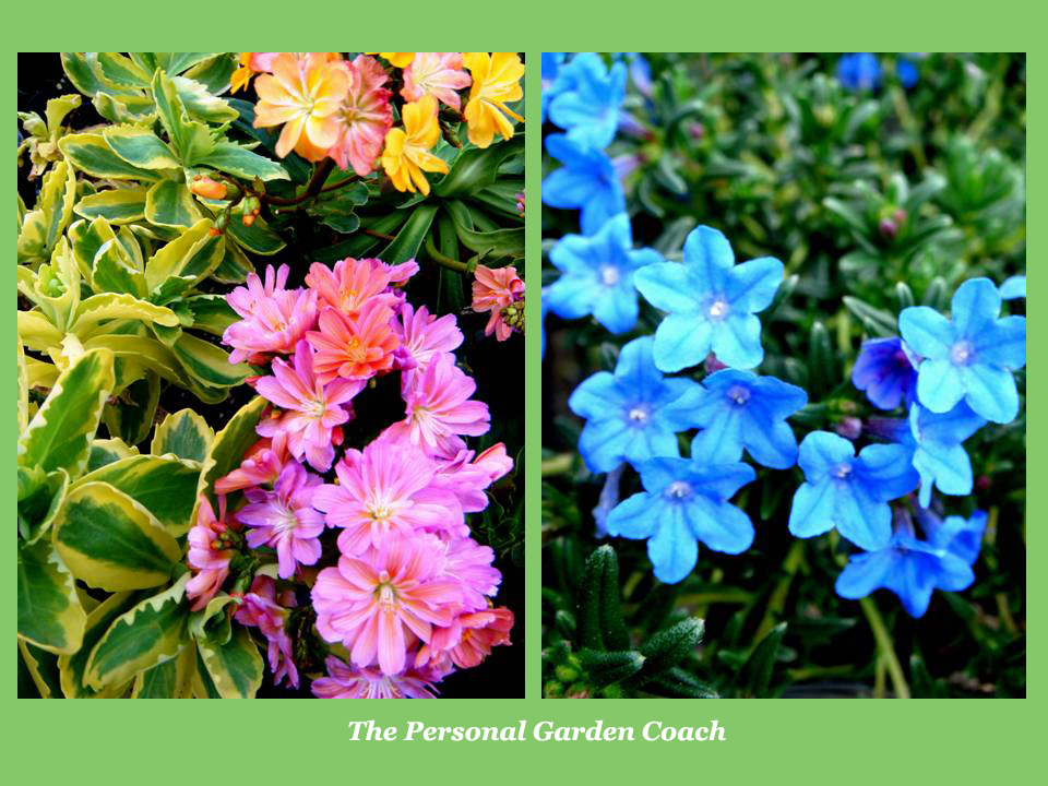 Early flowering perennial performers for impact the personal garden coach - Flowers that bloom from spring to fall ...