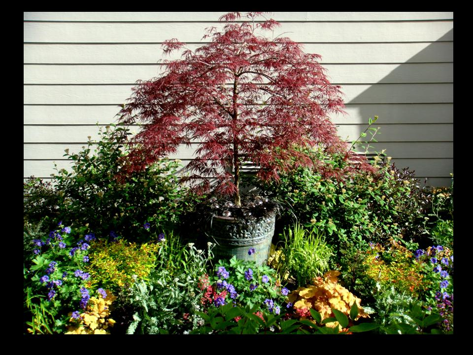 Garden designers roundtable top 10 go to landscape for Garden design with japanese maple