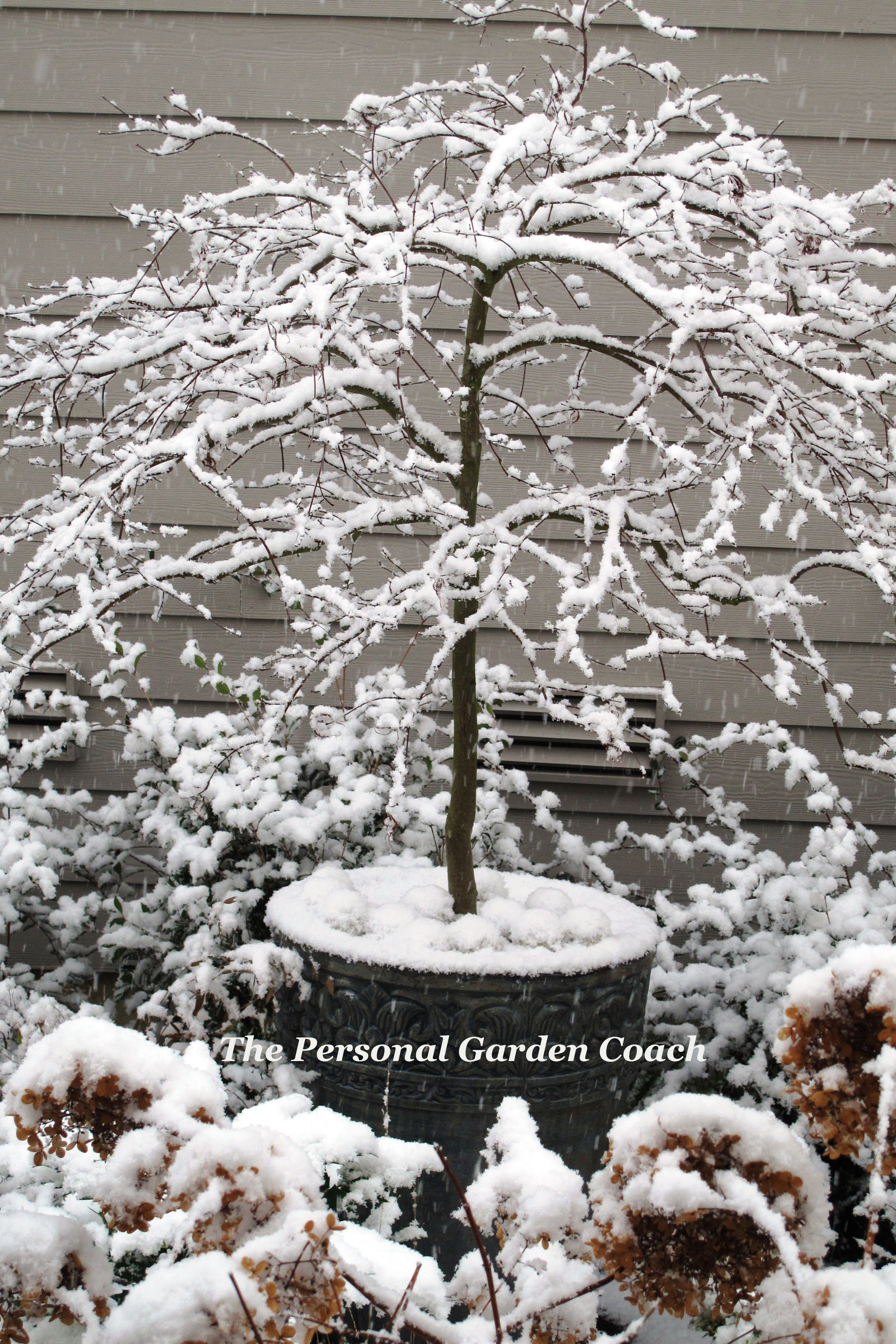 winter garden cougars personals Craigslist provides local classifieds and forums for jobs, housing, for sale, personals, services, local community, and events.