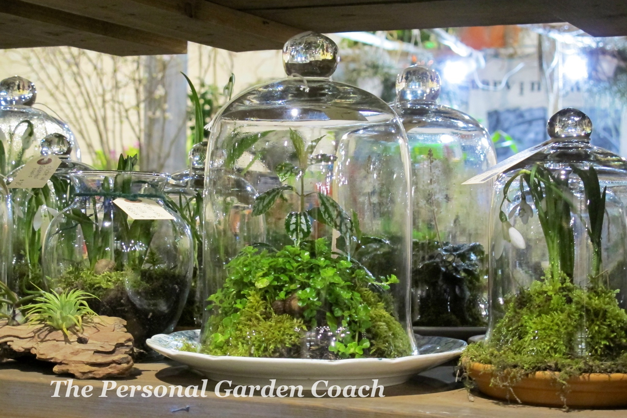 String Gardens And Terrariums Win Crowds At Philly Flower Show THE