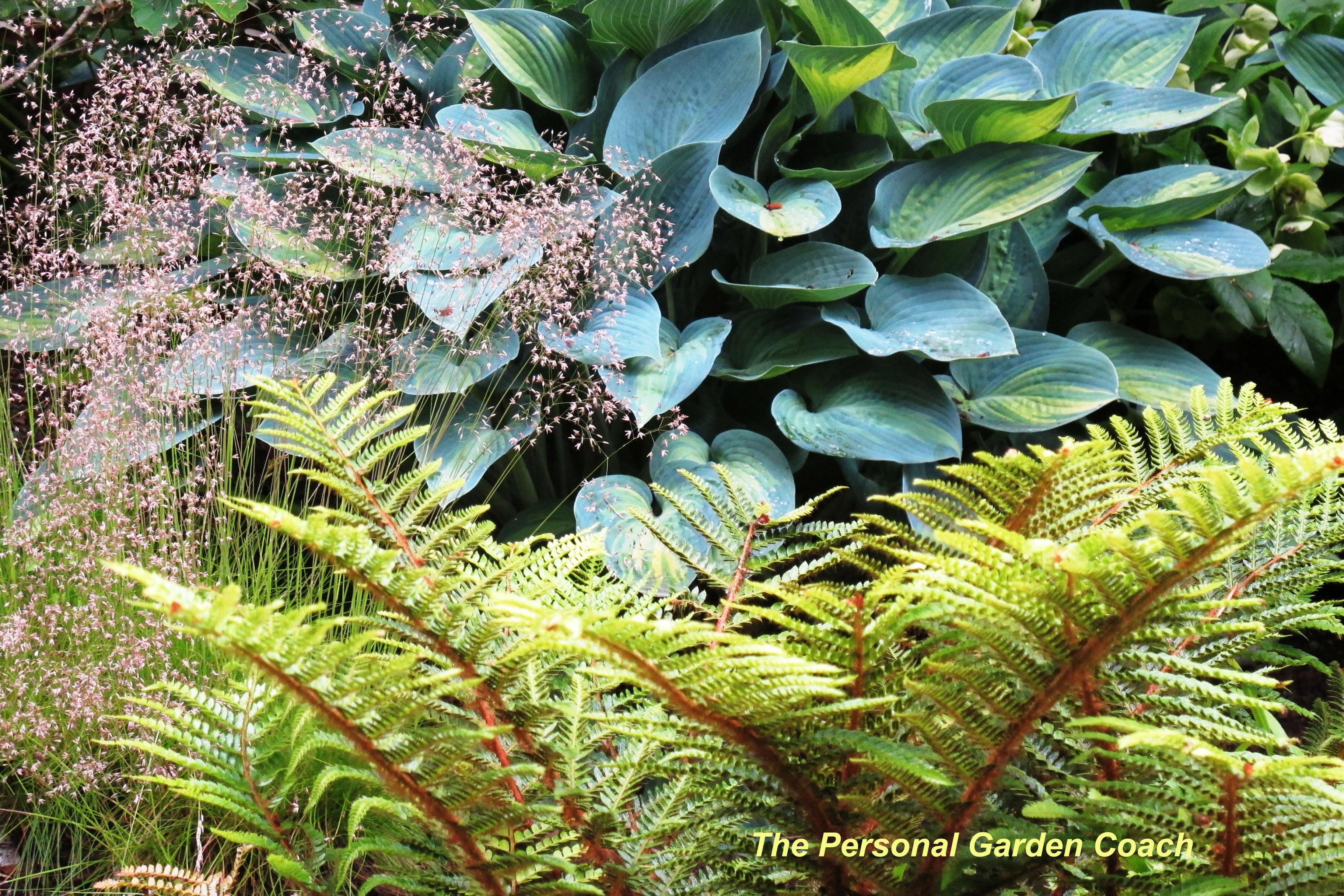 winter garden the personal garden coach