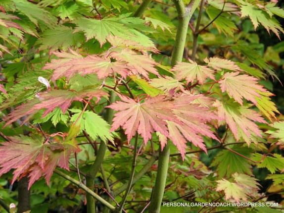 October 2012 Mitch Evans Garden 028