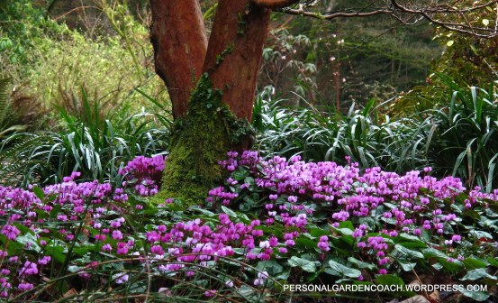 Winter Garden in The Seattle Arboretum- The Personal Garden Coach